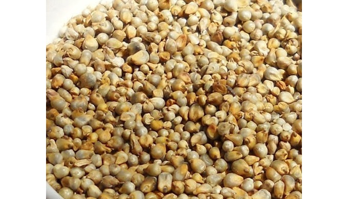 We are a manufacturer, Supplier, and Exporter of Indian Millet.