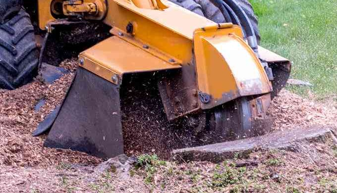 Clear space in your garden with tree stump grinding to prevent damage caused by roots.