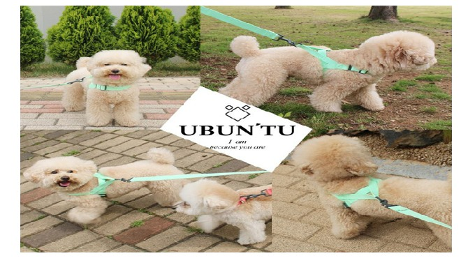 Daily harness for small & medium dog | pet harness
