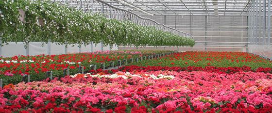 Ammatillinen puutarhanhoito