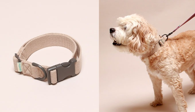 Daily collar for small & medium dog | pet products
