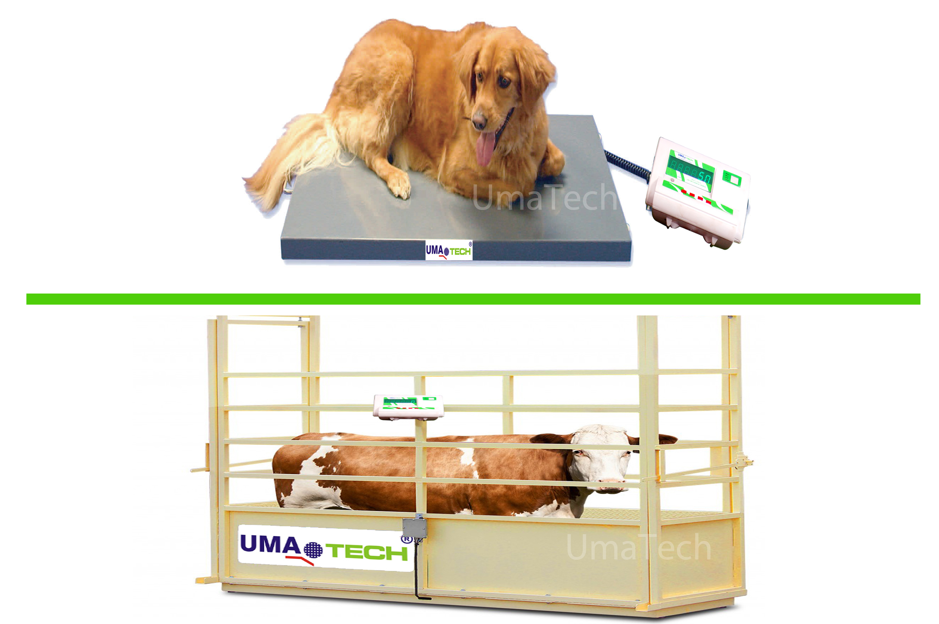 Veterinary & Animal Weighing Scales for Weighing Pets, Goats, Sheeps, Cows & Horses etc.,