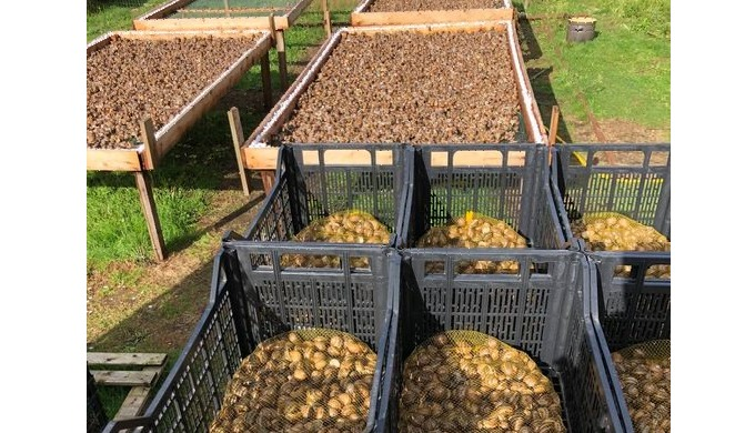 Snails bred in Belgium We are looking for regular recipients of fresh snails We are a snail farmer H...