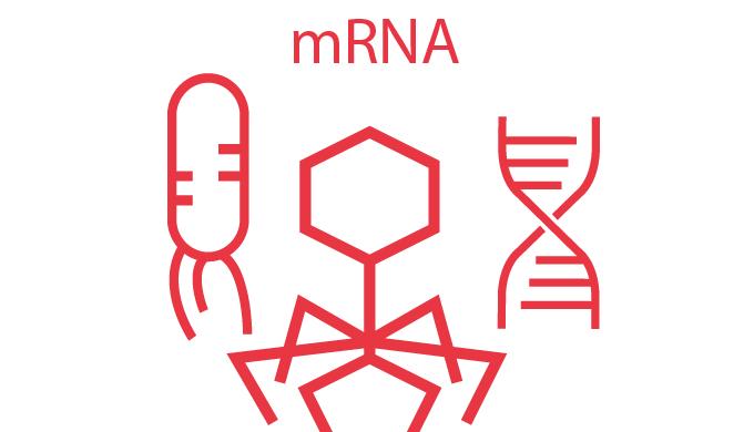 Transcriptómica RNAseq