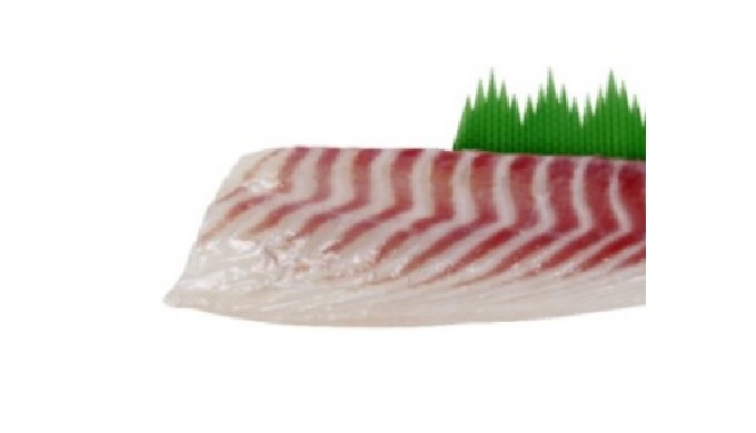 sea bream fillets | premium quality fish fillet