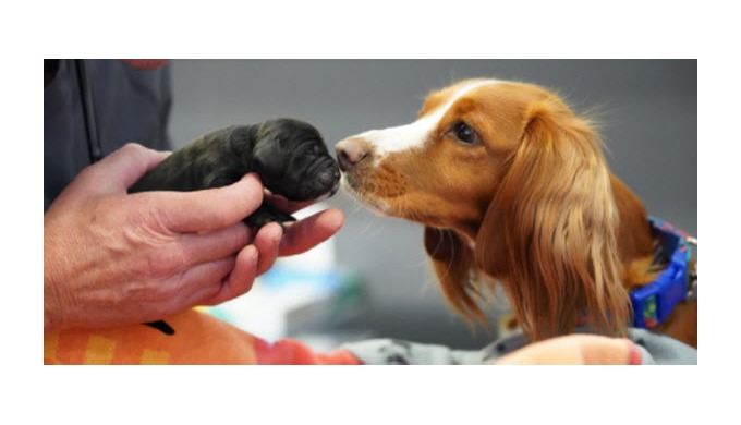 Claygate Veterinary Centre is part of The Partridge Practices Group, providing exceptional veterinar...