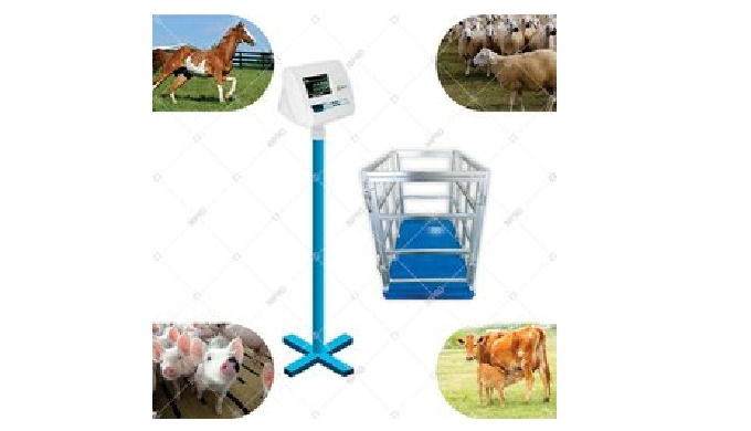 Animal Weighing Scale