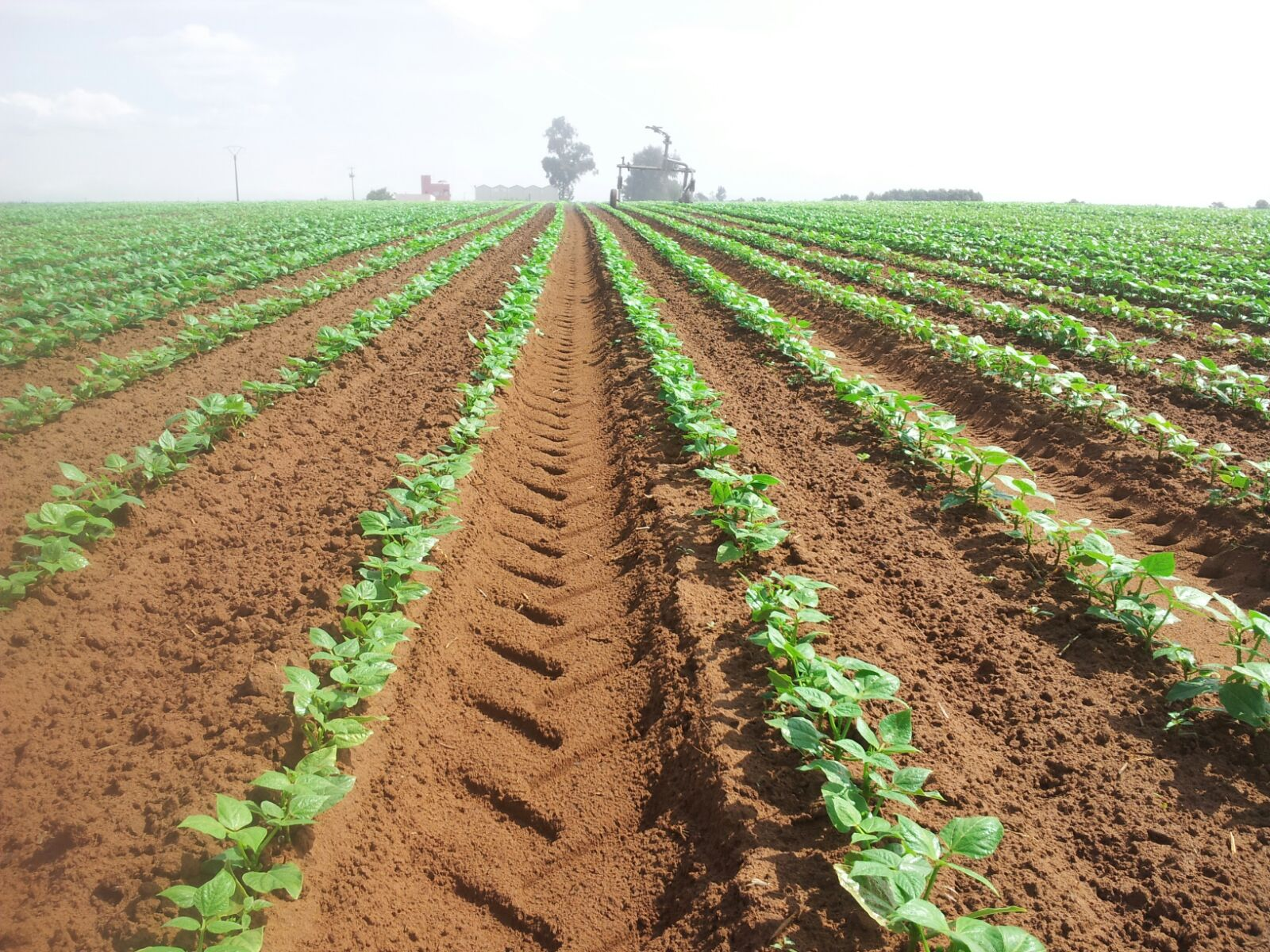 Etude et réalisation des projets d'irrigation par aspersion, goutte à goutte, gaine, micro jets et d...