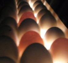 Nordland Automatic har markeds bedste og smarteste kyllingetæller. Den findes i to versioner - en 7-...