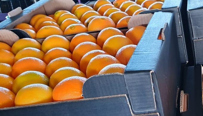 Greek oranges Navelina variety Sizes available from 1 -7 Packing 2kg sacks / 10kg carton boxes / 15k...