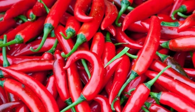 The chili pepper (also chile pepper, chilli pepper, or simply chilli) is the fruit of plants from th...