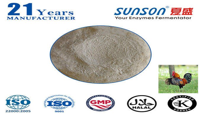 Xylanase enzyme for animal feed Nutrizyme XY--professional enzyme manufacturer since 1996