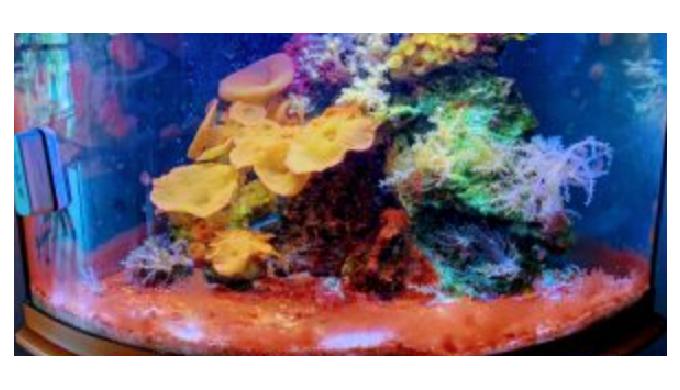 Tropical Fish Store with saltwater fish, freshwater fish, aquatic plants, aquaculture corals, coral ...