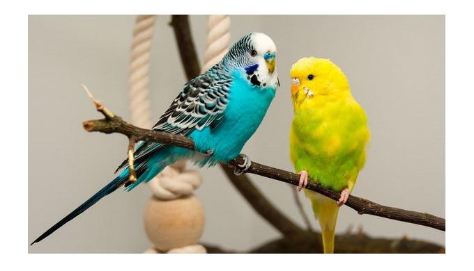 Як і людині, пташечці потрібен повноцінний раціон, із якого вона має отримувати всі потрібні їй пожи...