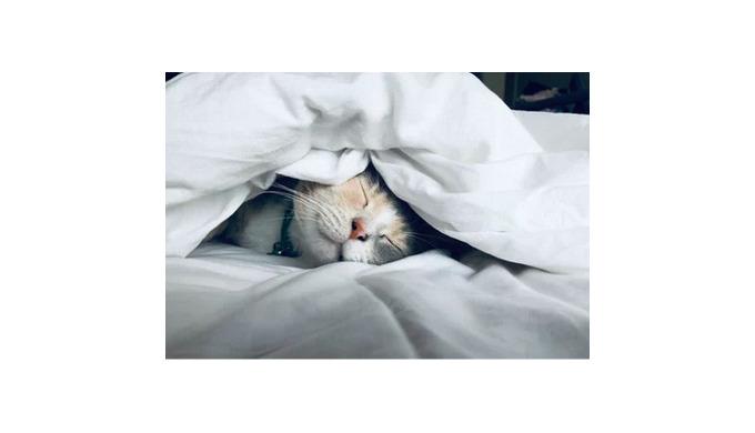 Мы проводим треть нашей жизни в кровати. Это означает, что на выбор правильной кровати нам стоит пот...