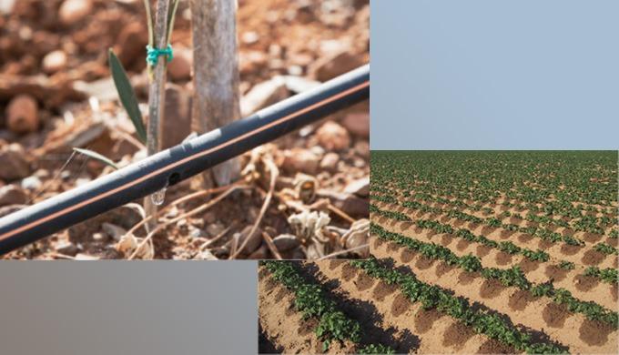 L 'irrigation de précision alimente la plante, pas le sol. Ce n'est pas une mince affaire. Parce que...