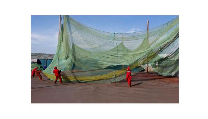 Camouflage nets - W J Knox
