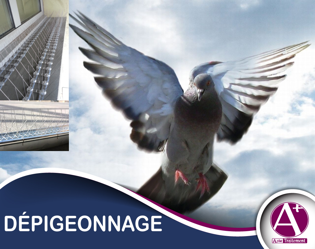 DEPIGEONNAGE ( DEPIGEONNISATION )
