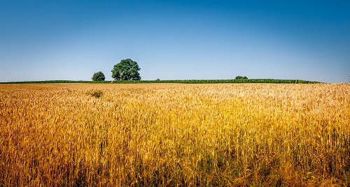 Futter- und Getreidekonservierung