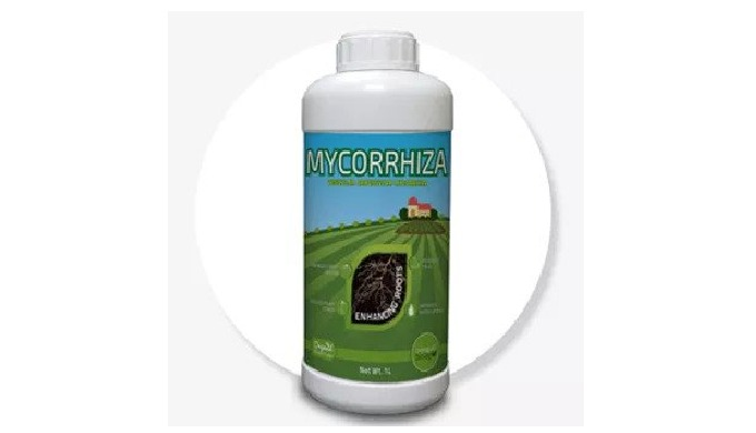 MYCORRHIZAL FUNGI (VESICULAR ARBUSCULAR MYCORRHIZAE) Mycorrhizal fungi form symbiotic relationships ...