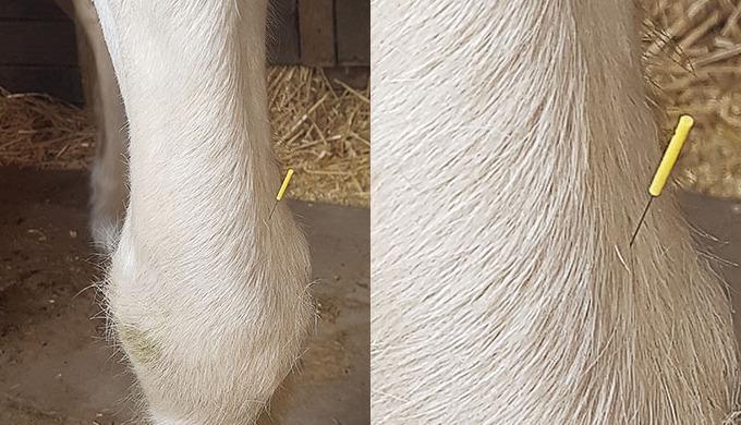 Tierheilkunde & Tierphysiotherapie in Arnsberg.???? Schnauze, Fell und Pfoten ist eine umfrangreich ...