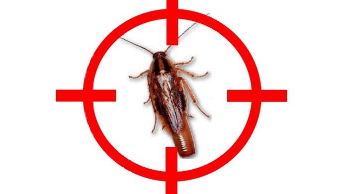 Ils sont nombreux les insectes à vous pourrir la vie. Blattes, cafards, foumis, puces, punaise de li...