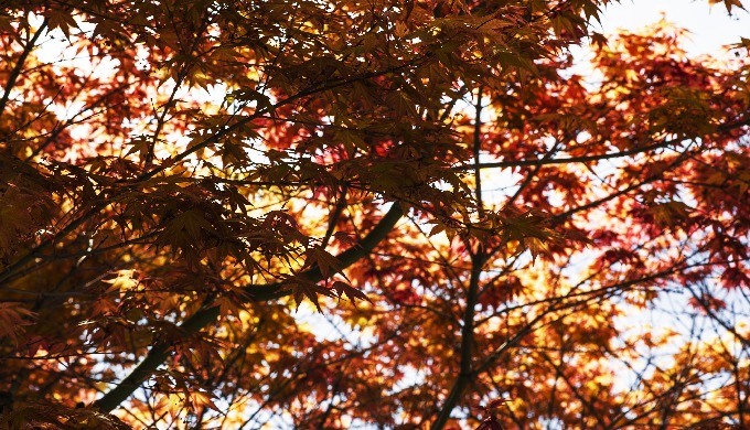 Tree Thyme Tree Surgeons are based in Croydon. Their Tree Surgery services extend to include tree st...
