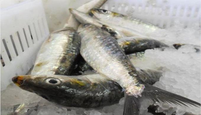 Exportation et commercialisation de produits de la mer congelés Nous disposons d'une assez large gam...