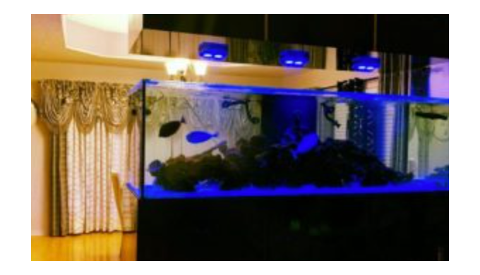 We are a Full Aquarium Store located in Hialeah, Florida with both freshwater fish and saltwater fis...