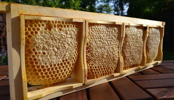 Wabenhonig ist der Honig in seiner natürlichsten Form, der mit der Wabe geerntet, verkauft und verze...