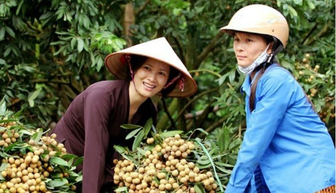 Product information: The scientific name of the longan is Dimocarpus longan, also known as the longa...
