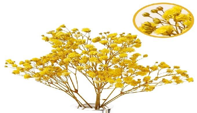 Conserves de Gypsophile | conserves de fleur