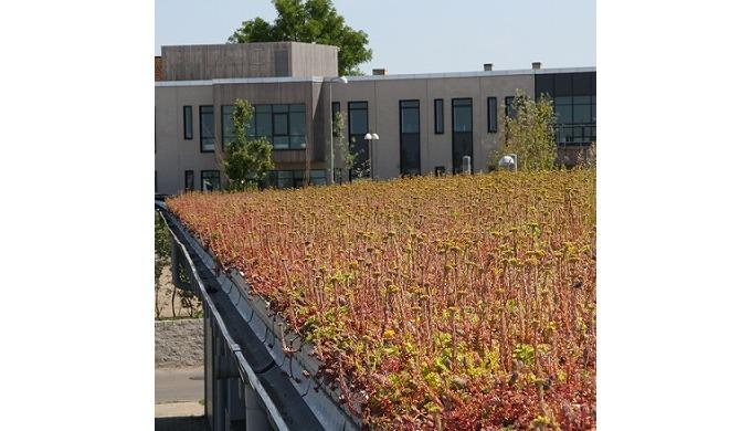 BGreen-it grønne tage - et komplet system BGreen-it grønt tag er totalopbygninger til grønne tage, s...