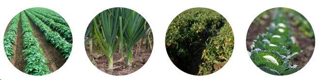 QUATERNA Technologies Marcel MEZY Légumiers est la garantie d'une réussite de vos cultures légumière...