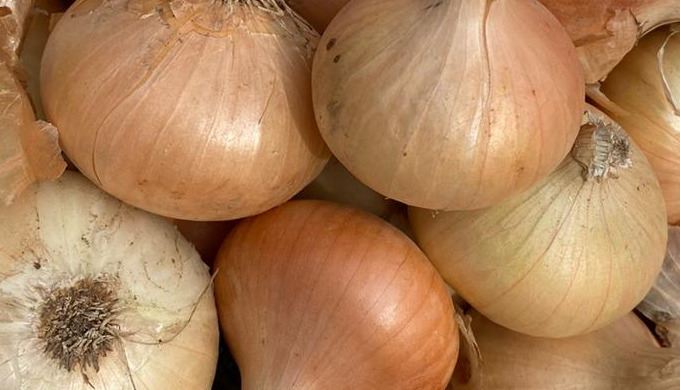 Egyptian A class onions. All sizes available. Packaging in 10kg or 25kg bags