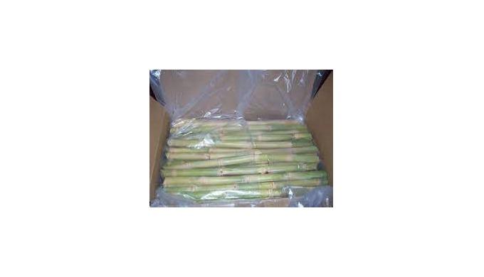 frozen sugarcane