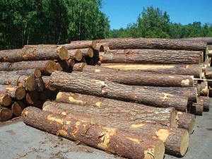 Nákup a prodej dřeva