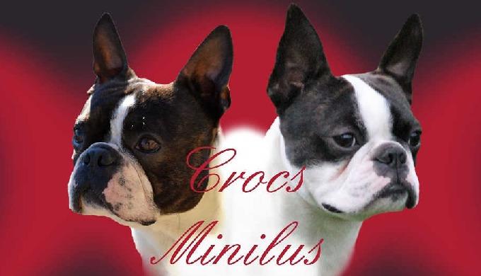 Crocs.Minilus est un élevage de chiens de race inscrits au LOF. Nous élevons 3 races à proximité de ...