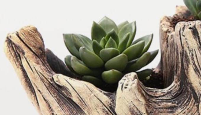 Welcome to Fake Plants - the house of reasonable, genuine and life like artificial plants. Fake indo...