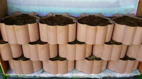 PLABL500A (Biodegradable Block)