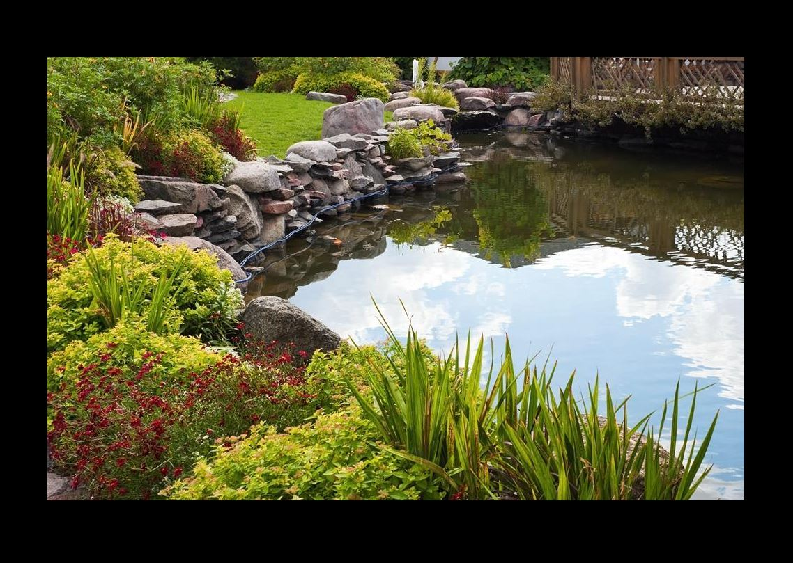 Service d'installation de bassins naturels à Périgueux