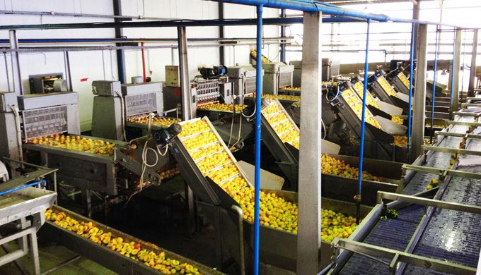 Fruit and vegetable canning plant