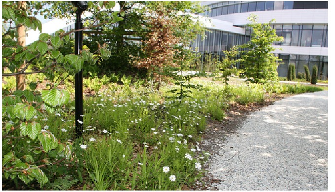 BG Byggros, Vilde planter