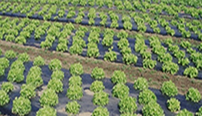 Union Plastique Maroc est une entreprise dont l'expertise s'est forgée autour de la transformation d...