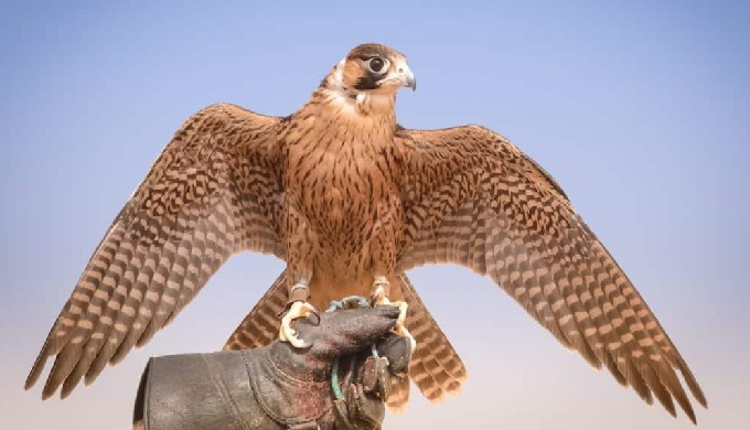 Urban Hawks provide Bird Control Solutions for many diverse industry's and domestic clients. We prov...