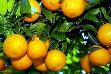 FRUCTIPLUS/Fertilizante especial para fructificación