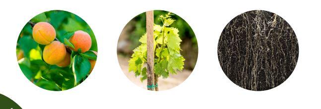 QUATERNA Technologies Marcel MEZY Plant est la garantie d'une réussite de et plantations et complant...