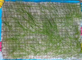 HJ-C2 (PLA Vegetation mats)