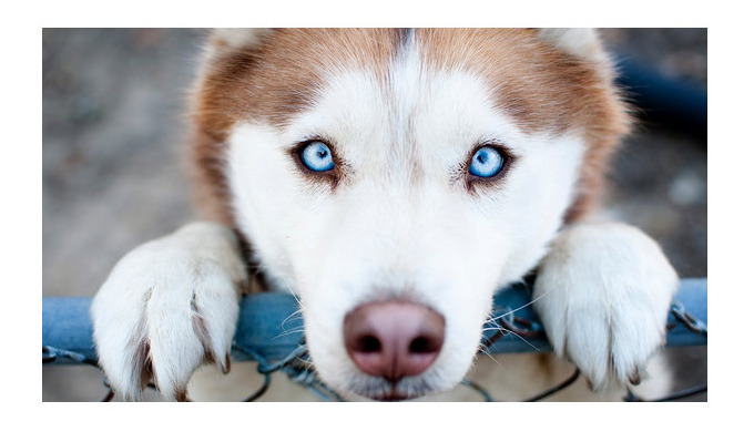 Класи кормів для собак і бренди, які їх виробляють