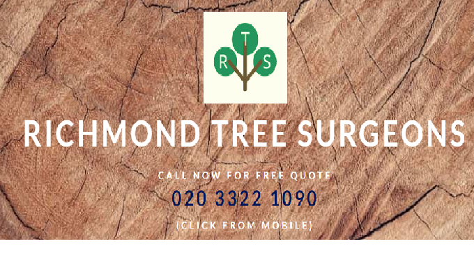 Are you looking for a reliable and qualified tree surgeon in Richmond upon Thames, Kingston, or Twic...